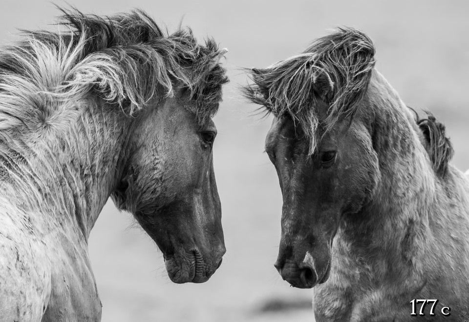 Черно белые фото лошадей