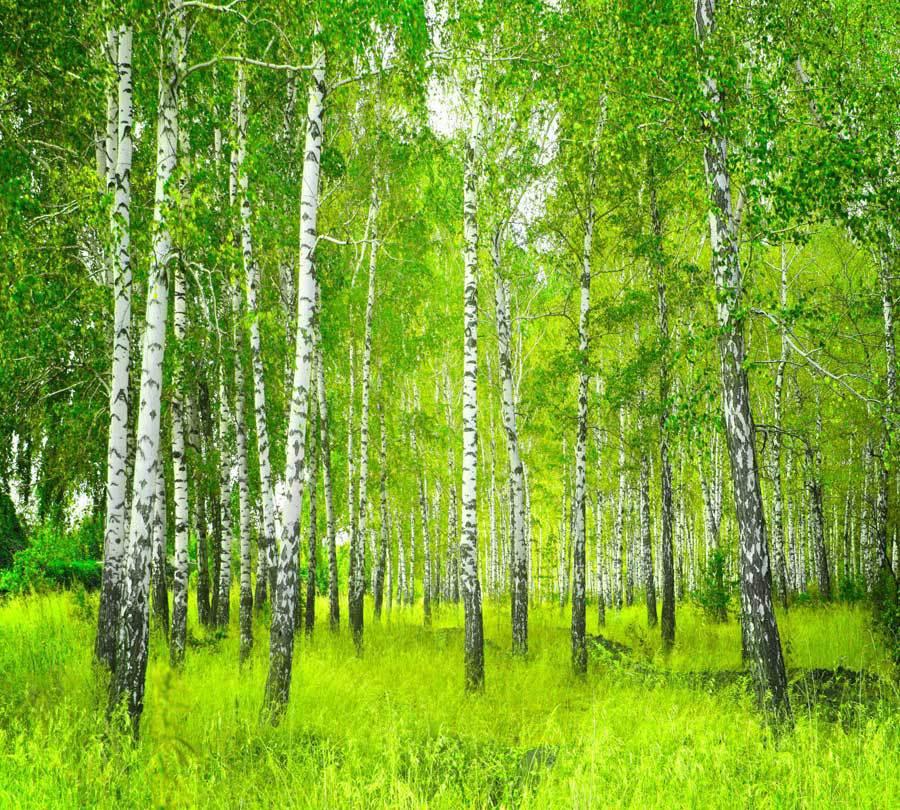 http://www.fotoshtora.ru/pictures/tovar/original/forest222_1.jpg
